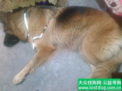 【深圳捡到狗】删不了,怎么弄....