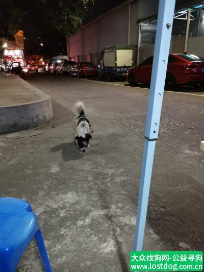 【江门捡到狗】路上遇到一只走丢的小狗狗